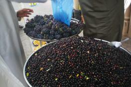 ألوان الفواكه العمانية تزين سوق نزوى في موسم الخيرات