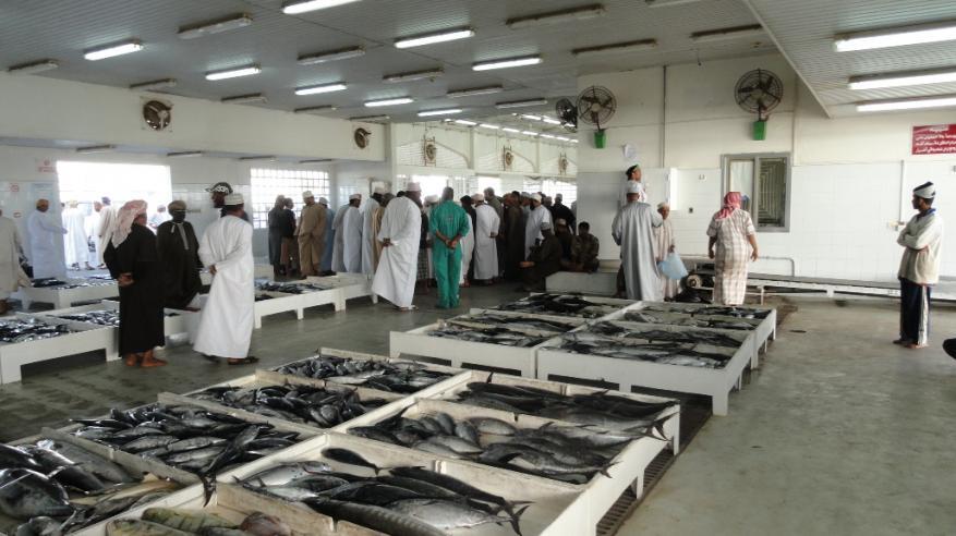 وفرة وتنوع في المعروض السمكي مع ثبات الأسعار.. والشركات تضخ كميات جديدة