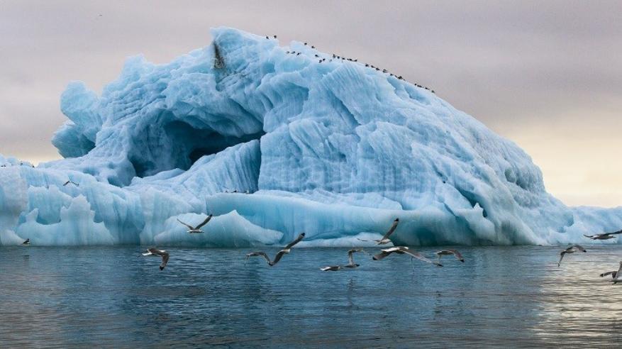حقيقة نقل جبال جليدية إلى الإمارات