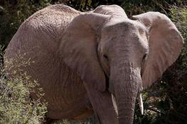 تعرف على الدولة التي يعيش فيها 130 ألف فيل