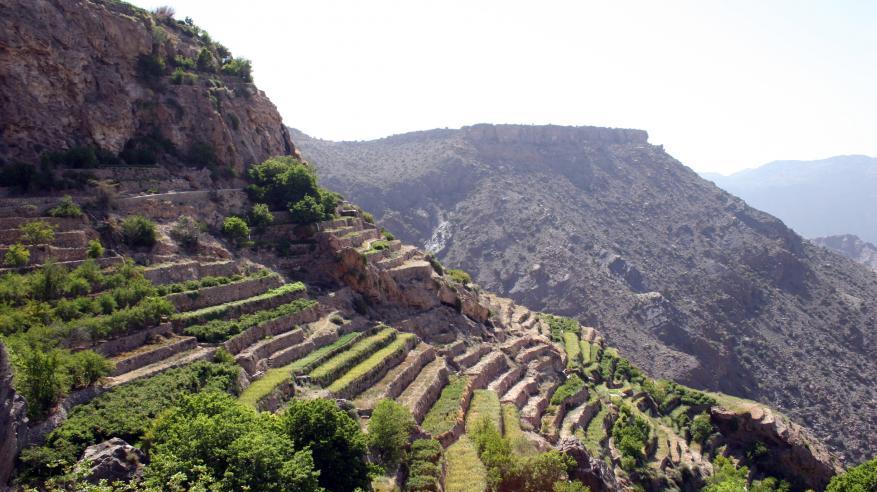 Jebel Akhdar 166e-alison