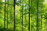 1000000000000 شجرة.. مبادرة عالمية لاستدامة البيئة