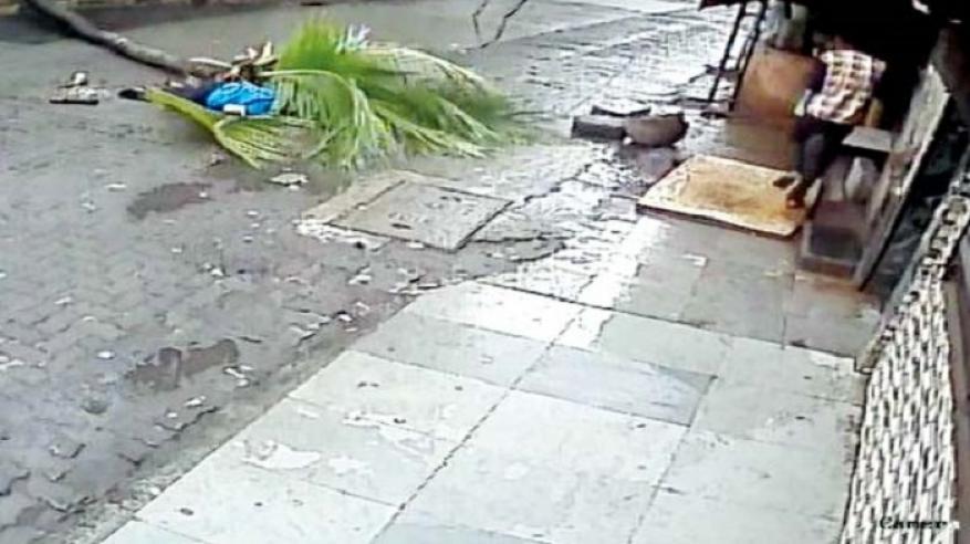 بالفيديو.. نخلة عملاقة تقتل مذيعة شهيرة