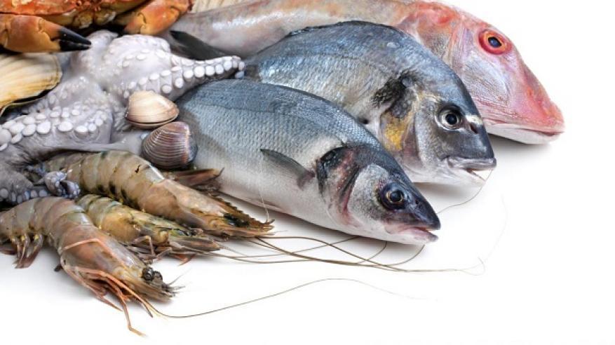 تصدير الأسماك العمانية جوا.. قريبا