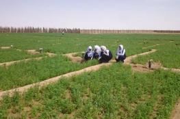الاحتفال باليوم العربي للزراعة بمدارس الوسطى