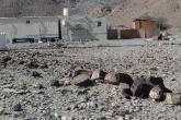 أهالي قرية السخنة يناشدون الجهات المعنية توفير كميات كافية من المياه ورصف الطريق المؤدي إلى الشارع العام