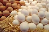 قريبا بالأسواق .. بيض يعالج السرطان