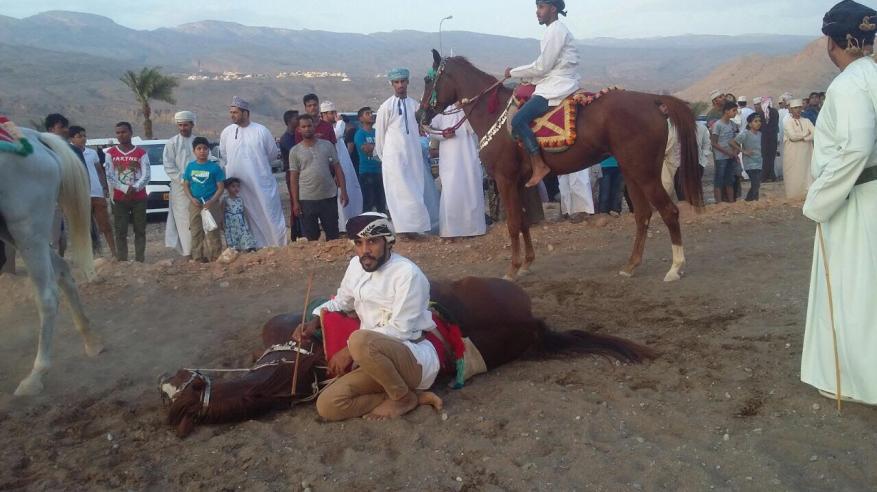 لجنة الفروسية بالحمراء تنظم مهرجان عرضة الخيل التقليدية