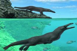 بالصور.. اكتشاف حفرية حوت بأربعة أرجل عاش قبل 43 مليون سنة