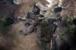 حادث مأساوي: مصرع 11 فيلا في حديقة حيوان تايلاندية
