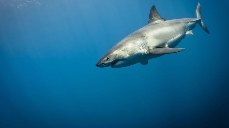 بالفيديو..معركة بين صياد واسماك القرش