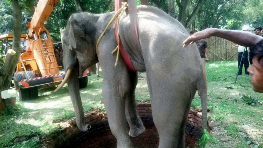 elephant-indian-well-3