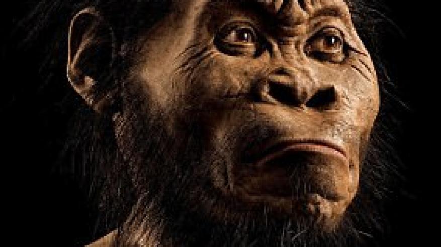 اكتشاف «الهومو» ينسف نظريات تطور الجنس البشري