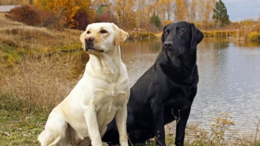 """السجن لرجل صيني أطلق على كلابه أسماء """"غير قانونية"""""""