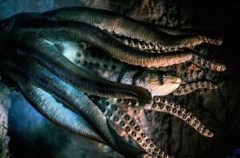 العثور على آثار حديثة لوحش مجهول في قاع المحيط الهادئ