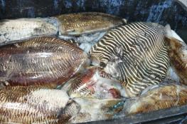 بدء موسم صيد الحبار في مياه السلطنة
