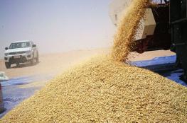 نجاح زراعة محصول الشعير في ثمريت