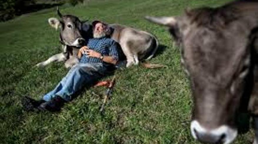 عناق البقر (2)