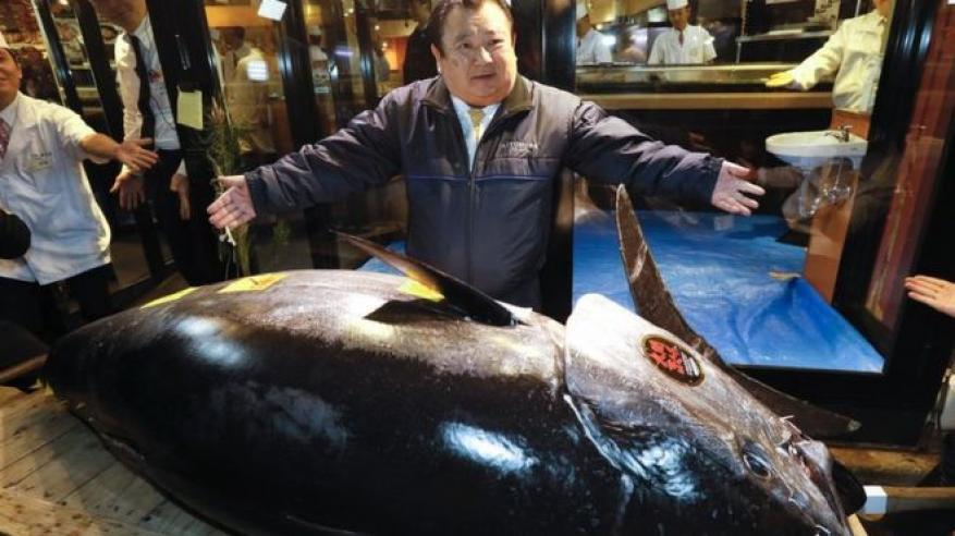 سمكة تونة بـ 3.1 مليون دولار