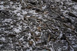 اكتشاف بقايا عظام في الهيمالايا تعود لآلاف السنين