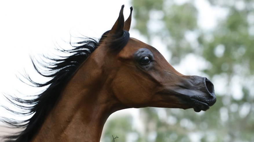 """العلم يحول """"حصان عربي"""" إلى """"كائن غريب"""""""