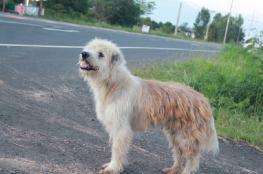 كلب وفي ينتظر صاحبه لمدة أربع سنوات!