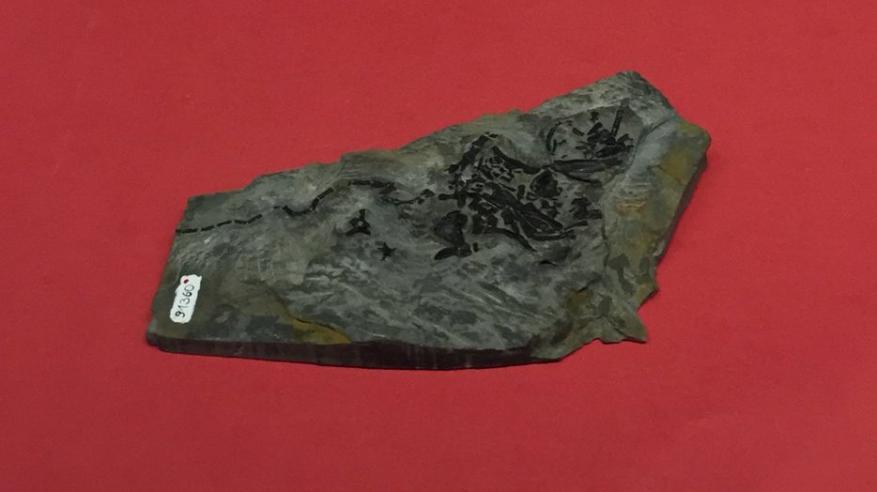 اكتشاف أقدم ورم سرطاني في العالم