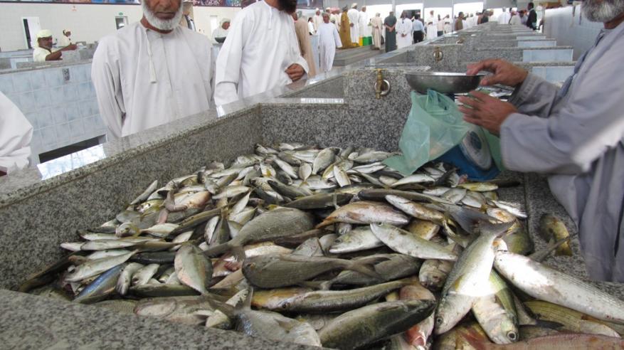 افتتاح سوق الأسماك الجديد بميناء الصيد البحري في السويق.. الأربعاء