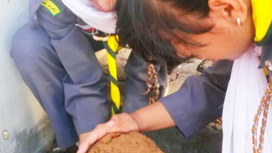 تشجيع طلاب الظاهرة على زراعة النباتات البرية