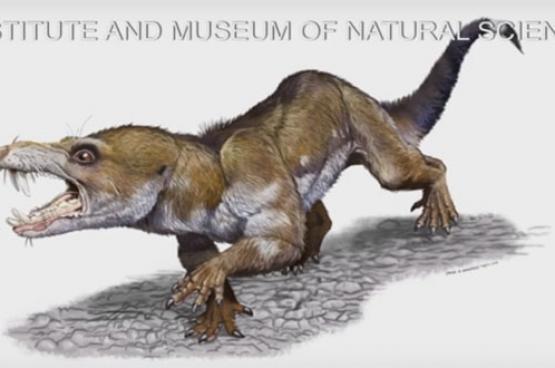 اكتشاف حيوان شبيه بالسنجاب يعود للعصر الترياسي