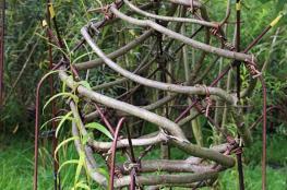 شجرة تتحول إلى مقعد .. زوجان بريطانيان يزرعان الأثاث!