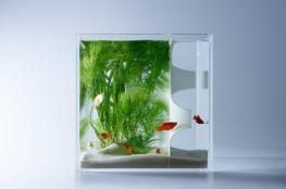 بالصور..أحواض سمك مستقبلية بأحدث التقنيات