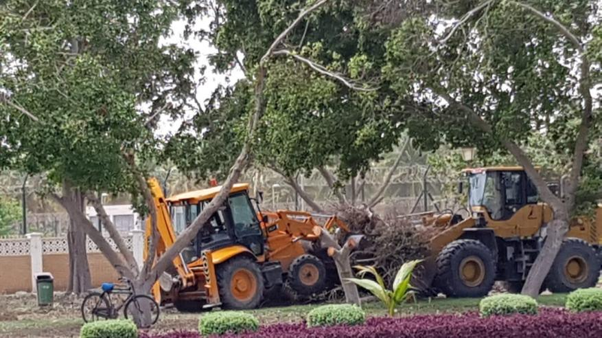 إعادة غرس الأشجار المُتضررة من الحالة المدارية بظفار