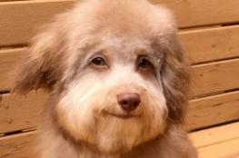 """بالصور.. كلب يثير الجدل بـ""""عيونه البشرية""""!"""