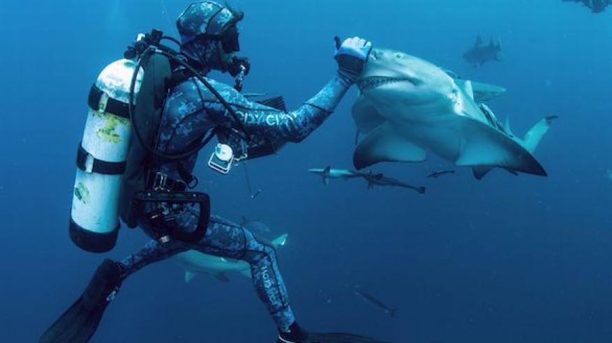 shark 4 (1)