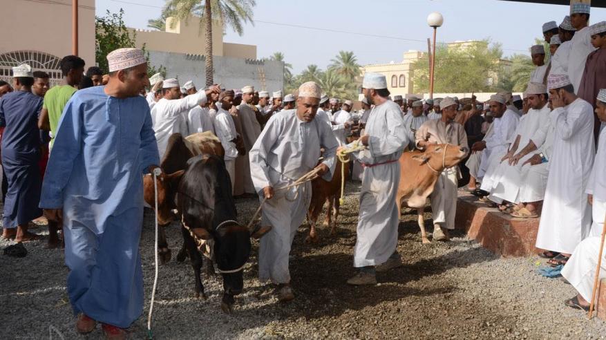 """حركة شرائية نشطة وعرض وفير من المواشي والأبقار في """"هبطة سوق سابع"""" بالولايات"""