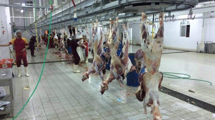 مسالخ شمال الشرقية تستقبل 5494 رأس ماشية خلال أيام العيد