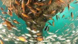 Artifical Reef _ Al Mouj Muscat .jpg