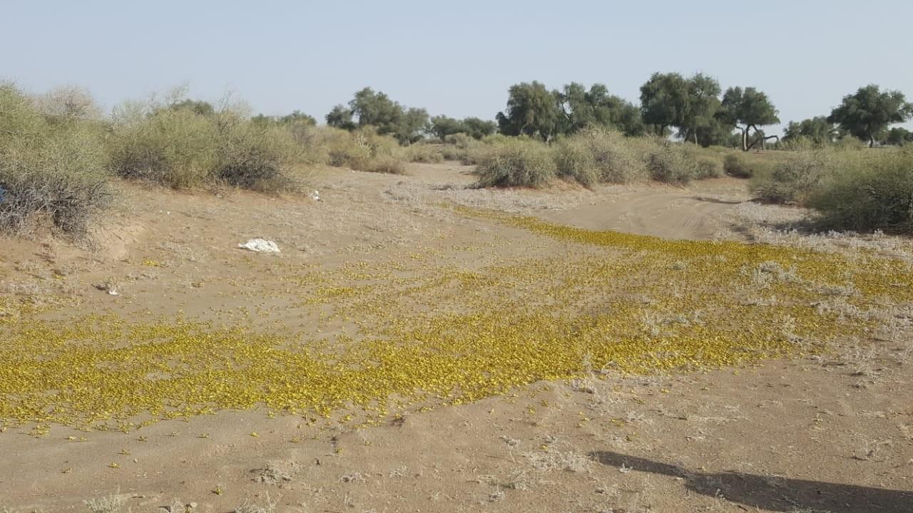 وزير الزراعة الجراد الصحراوي  (3).jpg